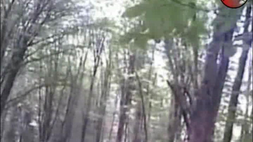 Вилаят Нохчийчоь Бой в Лесу (Осень 2011 года)